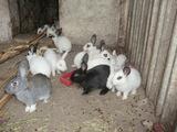 Vind iepuri de diferite virste, crec pina la 5 kg, sunt vacinati.